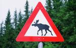 Сбили лося — порядок действий и установленные штрафы