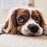 Если у соседей собака воет - что делать?