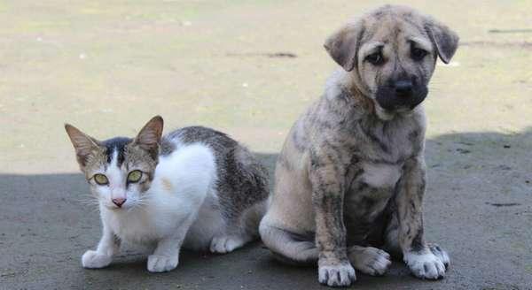 Налог на домашних животных в России в 2020 году