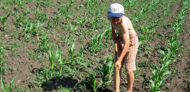 Наказания за незаконное использование детского труда