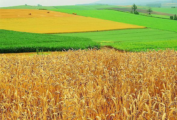 Как выполнить перевод сельскохозяйственного участка в ИЖС