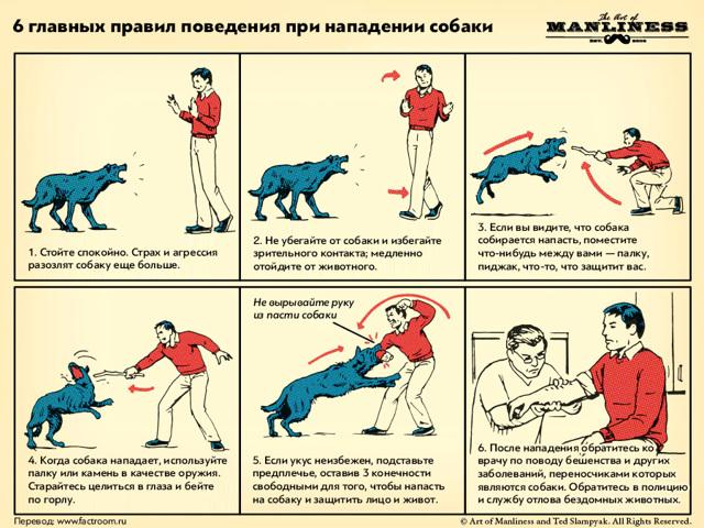 Порядок действий в случае нападение на человека собаки
