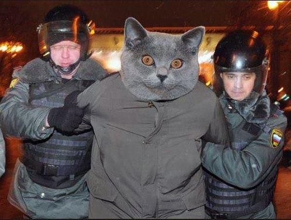 Оскорбление сотрудника полиции при исполнении: статья 319 УК РФ