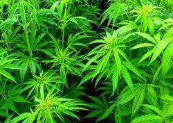 Статья 6.9 КоАП за употребление наркосодержащих веществ