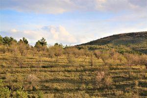 Определение кадастровой стоимости земельного участка в 2020 году