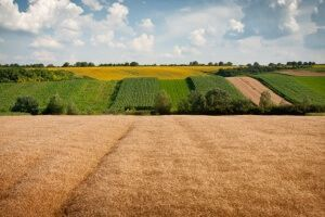Что такое земельный пай - выделение, оформление, способы использования